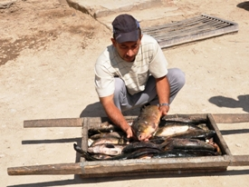 Trip to the Aral Sea. Fish